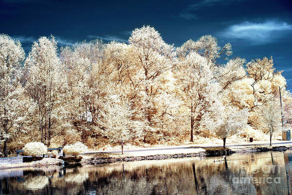 Wall Art - Photograph - Yellow Trees Along The Pond Infrared by John Rizzuto