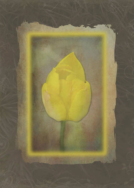Photograph - Yellow Tulip Frame by Patti Deters
