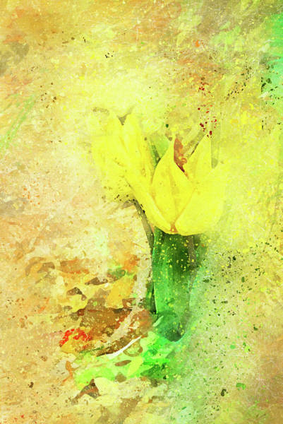 Photograph - Yellow Tulip Scatter by Kay Brewer