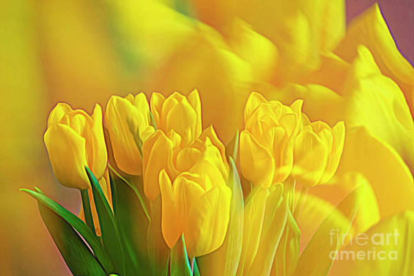 Abstract Impressionism Photograph - Yellow Tulips by Veikko Suikkanen