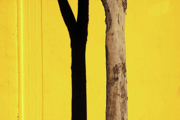 Photograph - Yellow Wall And Tree by Stuart Allen