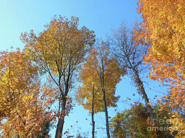 Photograph - Yellowish Autumn Trees by Rockin Docks