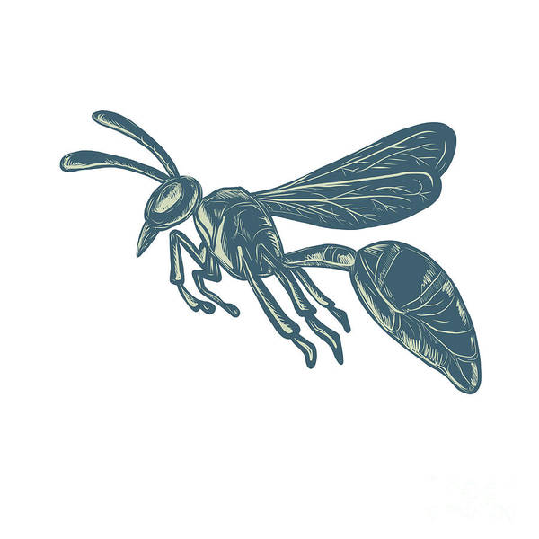 Wall Art - Digital Art - Yellowjacket Flying Scratchboard  by Aloysius Patrimonio