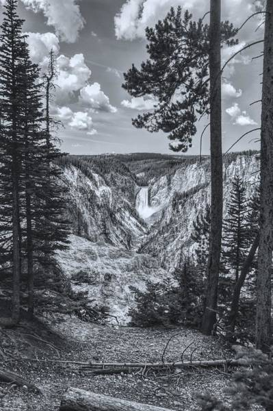 Photograph - Yellowstone Falls Black And White by Chance Kafka
