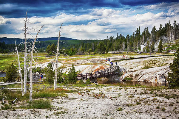 Photograph - Yellowstone Trails In The Geyeser Basin by Tatiana Travelways
