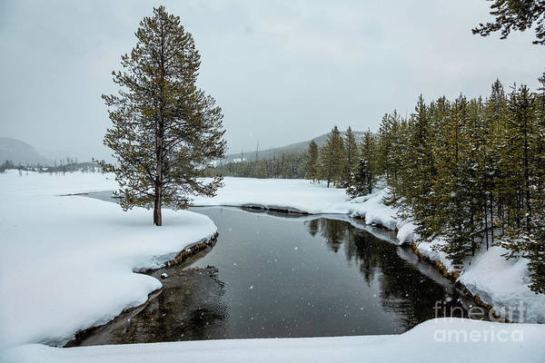 Wall Art - Photograph - Yellowstone Winter Scenery by Timothy Hacker