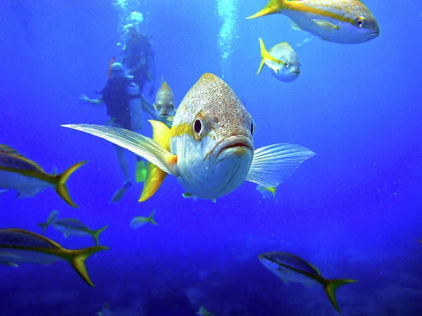 Photograph - Yellowtails by Climate Change VI - Sales