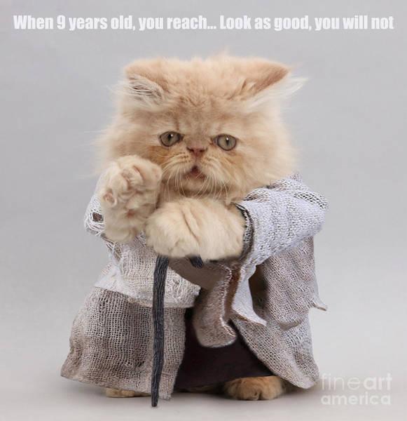 Photograph - Yoda Cat by Warren Photographic