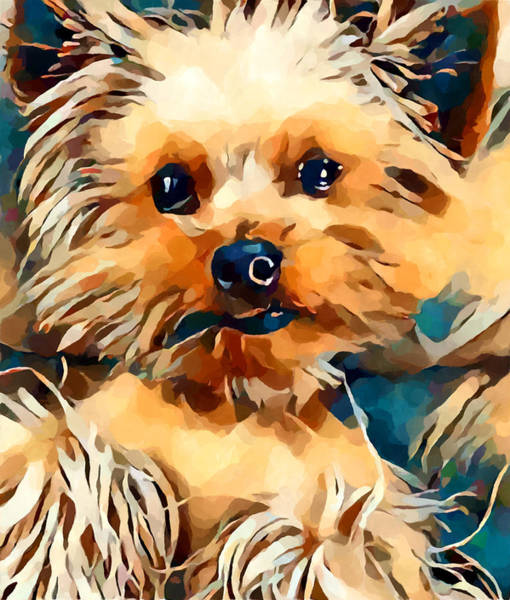 Wall Art - Painting - Yorkie by Chris Butler