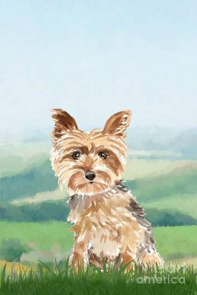 Pedigree Painting - Yorkshire Terrier by John Edwards
