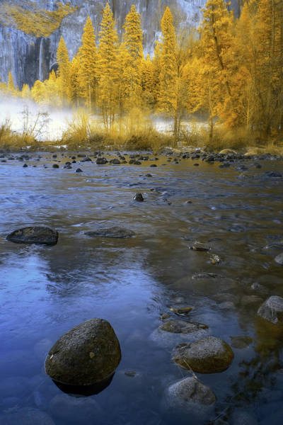 Wall Art - Photograph - Yosemite River In Yellow by Jon Glaser