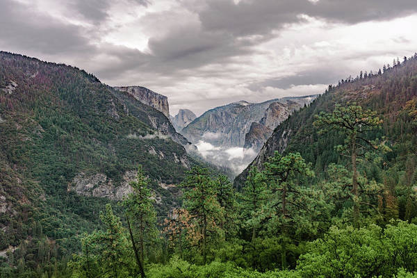 Photograph - Yosemite Valley 2 by Silvia Marcoschamer