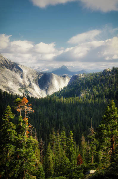 Photograph - Yosemite Valley Forest by RicardMN Photography