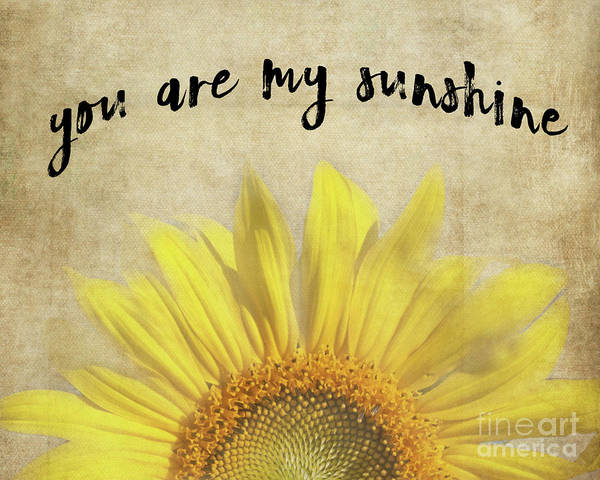 Photograph - You Are My Sunshine by Pam  Holdsworth