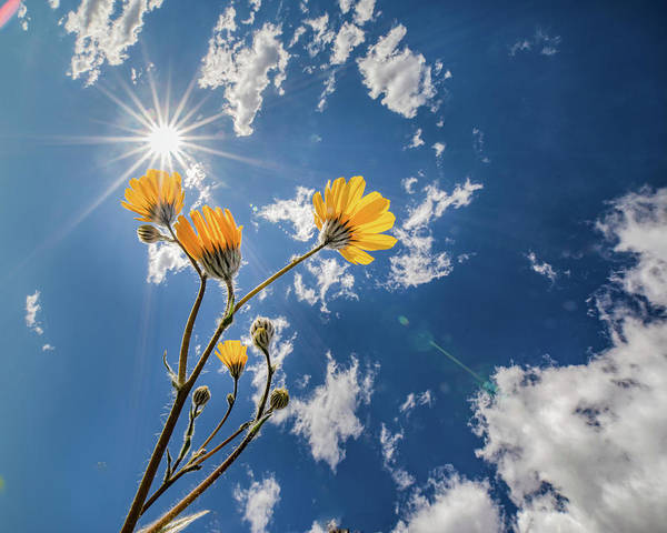 Wall Art - Photograph - You Are My Sunshine by Peter Tellone