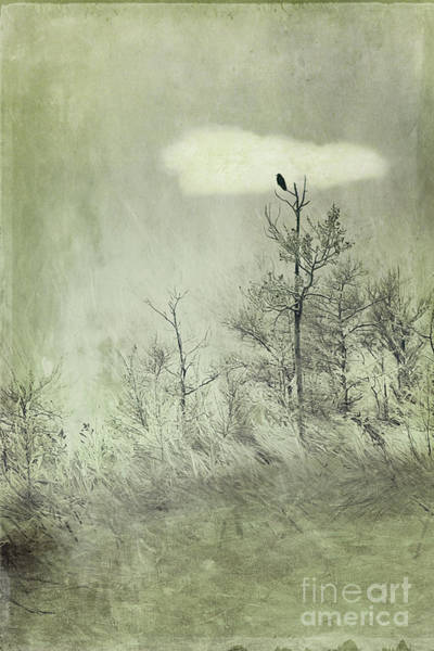 Perching Photograph - You Are Not Here by Priska Wettstein