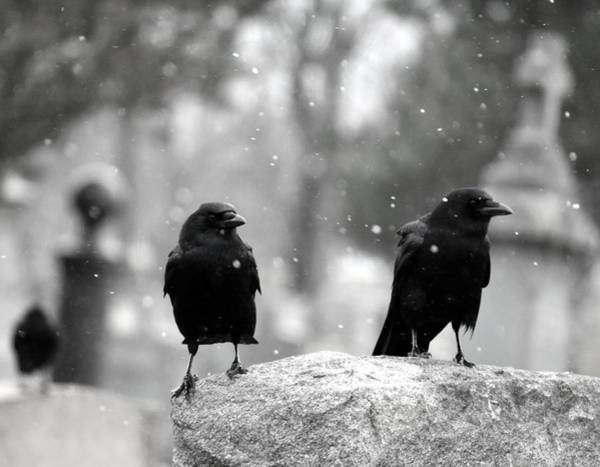 Wall Art - Photograph - You Could Call Them Snow Birds by Gothicrow Images