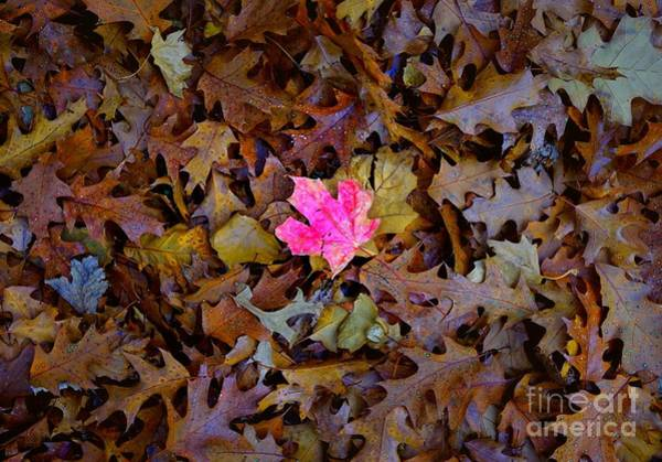 Photograph - You Stand Out In A Crowd Because You Are Special by Christopher Shellhammer