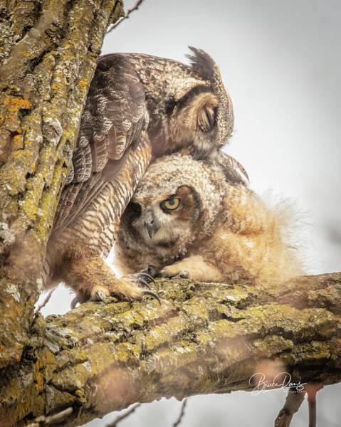 Empty Nest Wall Art - Photograph - You'll Always Be My Owlet by Bruce Danz