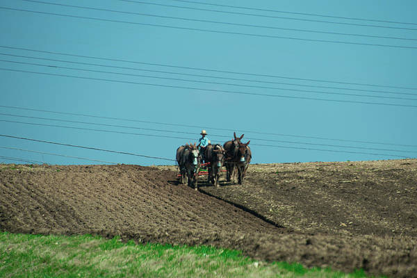 Plow Horses Photograph - Young Amish Farmer Plowing File Beneath Power Lines by Bill Cannon