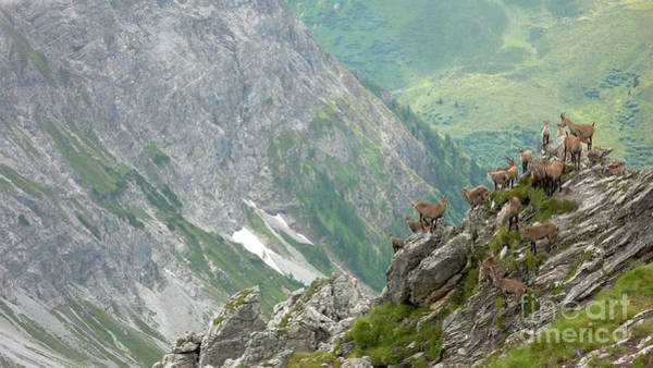 Goat Rocks Photograph - Young And Daring by DiFigiano Photography