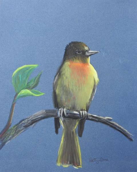 Wall Art - Pastel - Young Baltimore Oriole by Betty-Anne McDonald