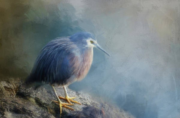 Wall Art - Digital Art - Young Blue Heron Painted by Terry Davis