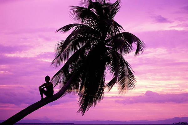 Ambergris Caye Photograph - Young Boy In Palm Tree At Sunset by Greg Johnston