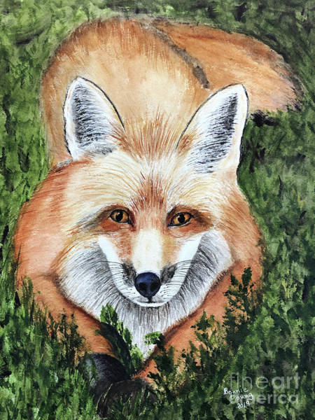 Wall Art - Painting - Young Fox by Bonnie Young