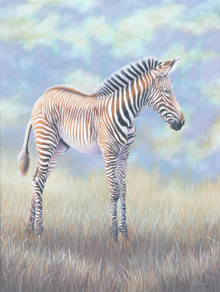 Painting - Young Grevy Zebra by Tish Wynne