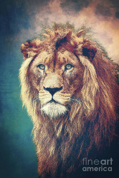 Mixed Media - Young Lion by Angela Doelling AD DESIGN Photo and PhotoArt