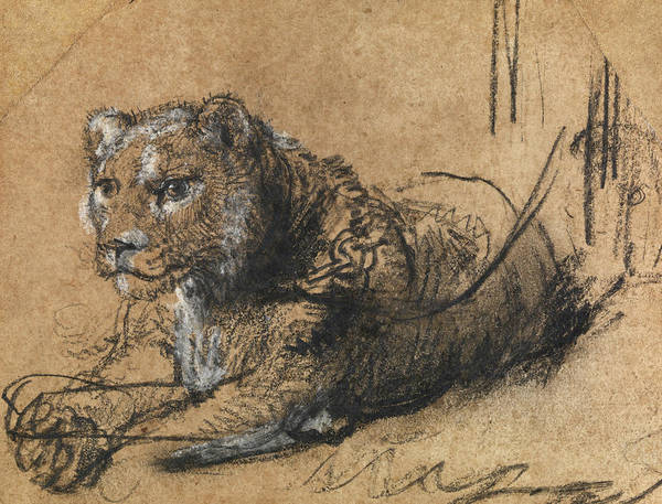 Wall Art - Painting - Young Lion Resting by Rembrandt van Rijn