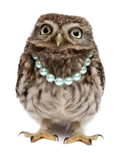 Little People Photograph - Young Little Owl Wearing A Pearls Collar by Life On White