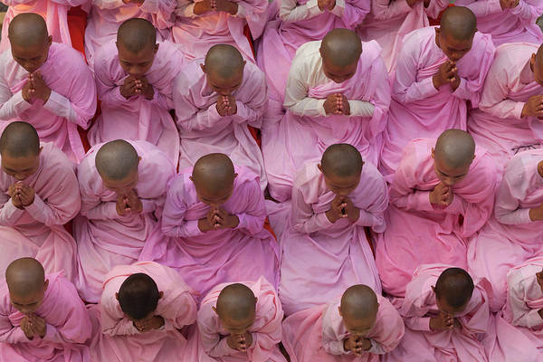 Shaved Head Photograph - Young Nuns In Prayer, Myanmar by Danita Delimont