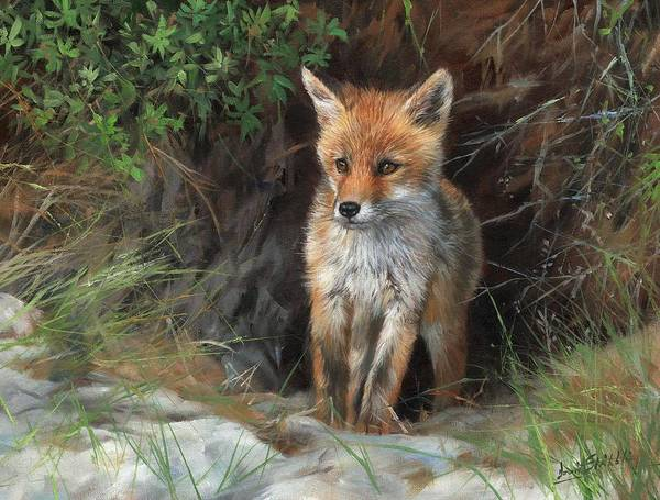 Painting - Young Red Fox by David Stribbling