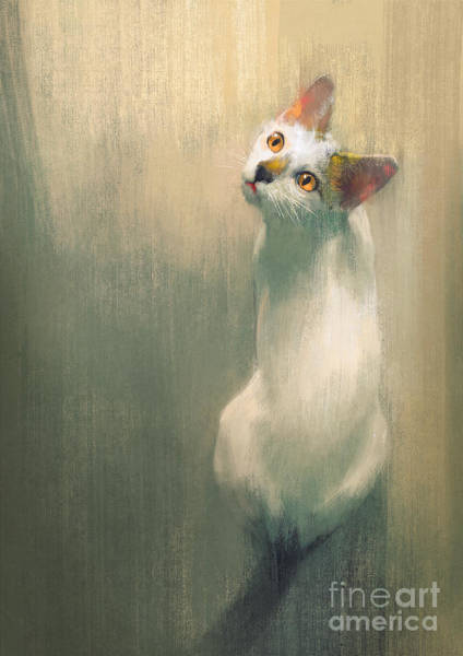 Wall Art - Digital Art - Young White Cat Looking Up,digital by Tithi Luadthong