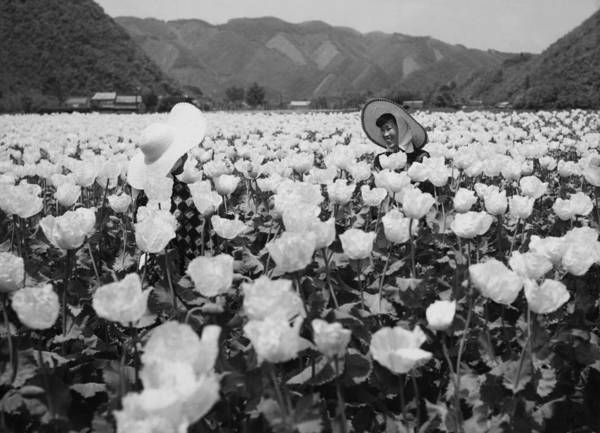 Okayama Prefecture Photograph - Young Women In A Field Of Poppies In by Keystone-france