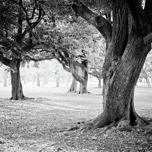 Photograph - Yoyogi Park, Japan, Tokyo by H-pom