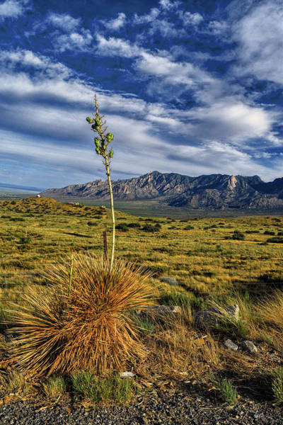 Photograph - Yucca And Organ Mountains, New Mexico by Chance Kafka