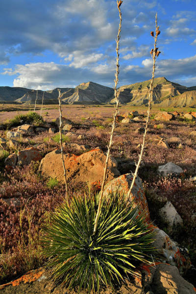 Photograph - Yucca Plant At The Book Cliffs by Ray Mathis