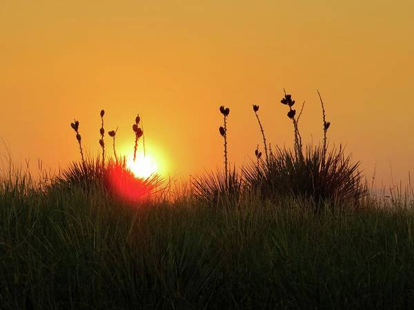Arapahoe County Wall Art - Photograph - Yucca Sunset by Connor Beekman
