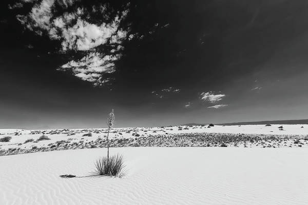 Wall Art - Photograph - Yucca, White Sands National Monument - Monochrome by Melanie Viola
