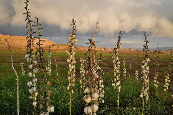 Photograph - Yuccas Beneath Storm Clouds At Book Cliffs by Ray Mathis