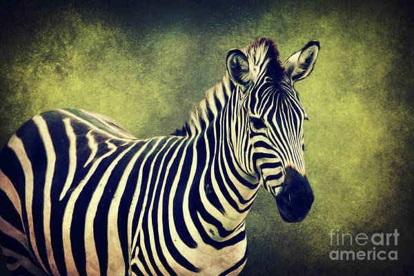 Mixed Media - Zebra by Angela Doelling AD DESIGN Photo and PhotoArt