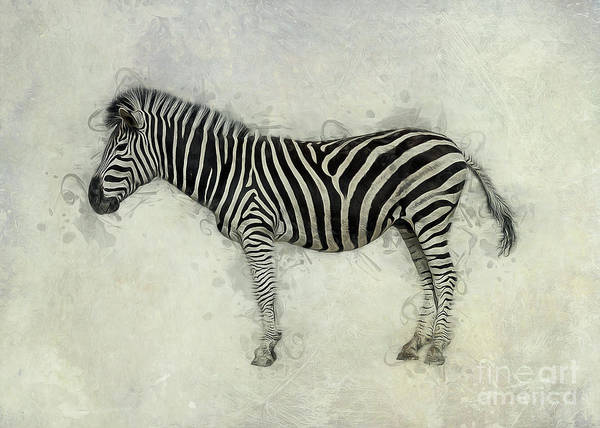 Digital Art - Zebra Art by Ian Mitchell