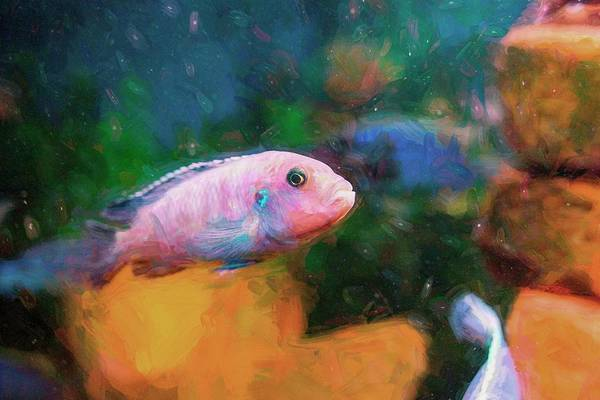 Digital Art - Zebra Cichlid Impasto by Don Northup