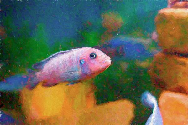 Digital Art - Zebra Cichlid Painterly by Don Northup