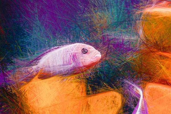 Digital Art - Zebra Cichlid Pastel by Don Northup