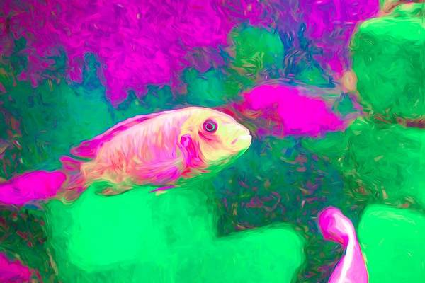 Digital Art - Zebra Cichlid Pink Neon by Don Northup