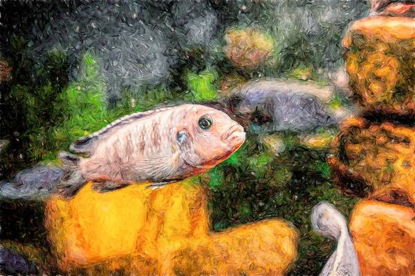 Digital Art - Zebra Cichlid Toned by Don Northup